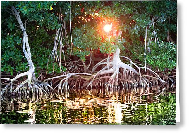 Mangrove Forests Greeting Cards - Mangrove Sunset Greeting Card by Karen Wiles