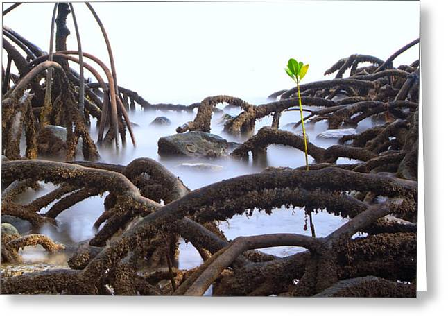 Mangrove Forest Greeting Cards - Mangrove Tree Roots Detail Greeting Card by Dirk Ercken