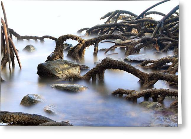 Mangrove Trees Greeting Cards - Mangrove Tree Roots Greeting Card by Dirk Ercken