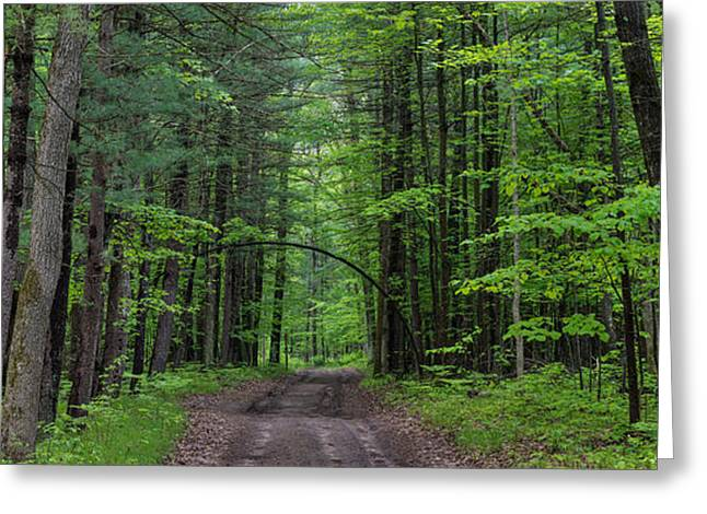 Manistee National Forest Michigan Greeting Card by Steve Gadomski
