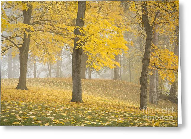 Spokane Greeting Cards - Manito Mists Greeting Card by Idaho Scenic Images Linda Lantzy