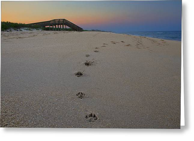 Dog In Waves Print Greeting Cards - Mans Best Friend at Sunset Greeting Card by Karen Newman