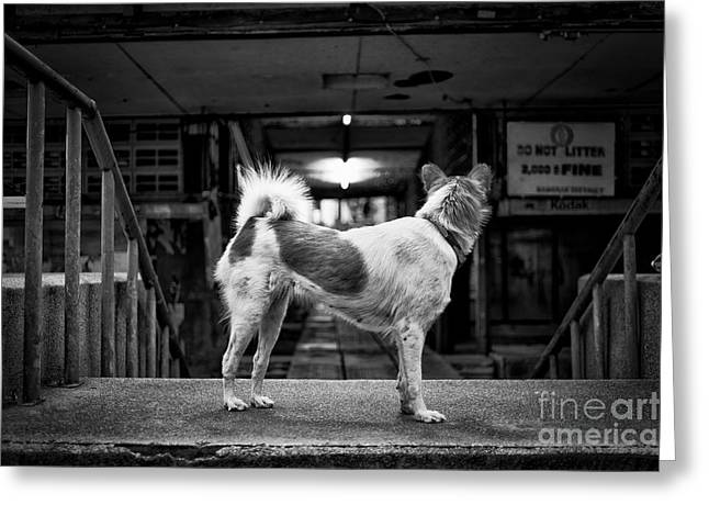 Stray Greeting Cards - Mans Best Friend Greeting Card by Dean Harte