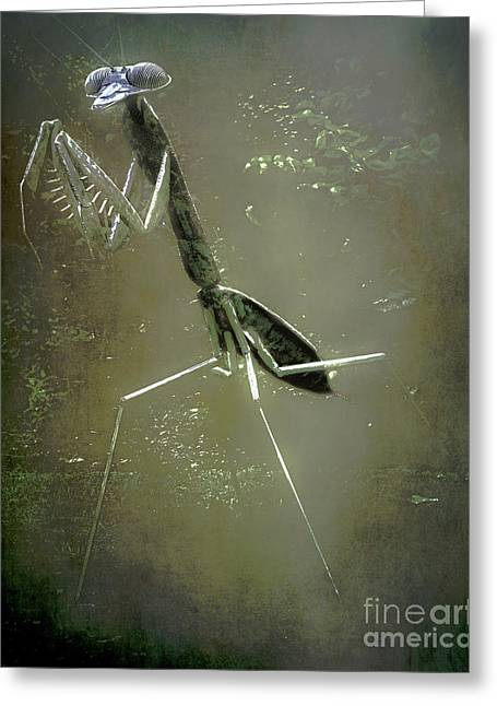 Mantis II Greeting Card by Arne Hansen