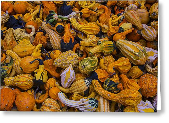 Gourds Greeting Cards - Many Colorful Gourds Greeting Card by Garry Gay