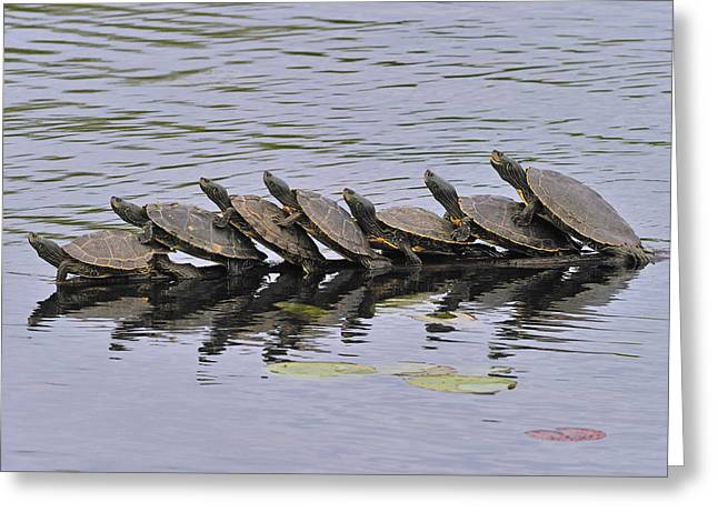 Terrapin Greeting Cards - Map Turtles Greeting Card by Tony Beck