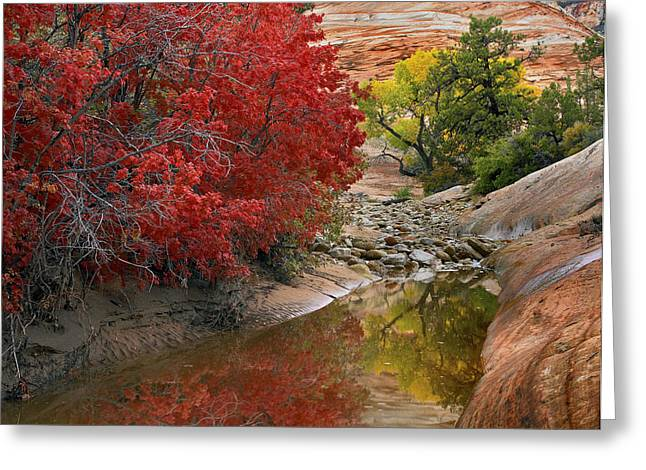 Photos Of Autumn Greeting Cards - Maple And Cottonwood Trees In Autumn Greeting Card by Tim Fitzharris