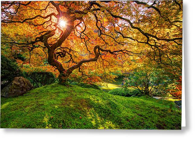 Portland Oregon Greeting Cards - Maple  Greeting Card by Dustin  LeFevre