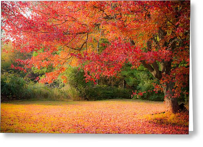 """autumn Foliage New England"" Greeting Cards - Maple In Red And Orange Greeting Card by Jeff Folger"