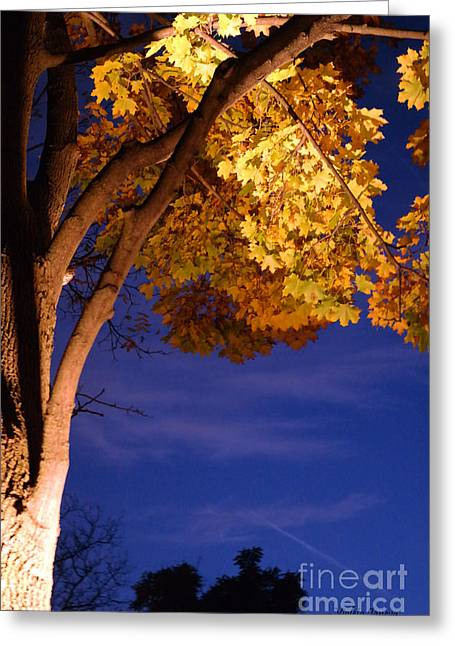Long Street Greeting Cards - Maple In The Night Greeting Card by Violeta Ianeva