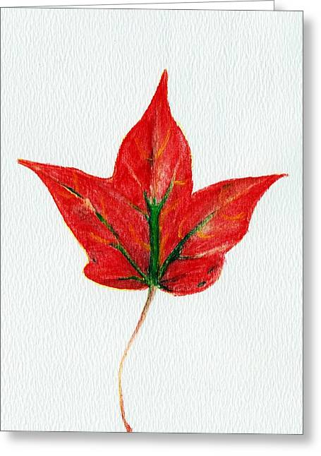 Canadian Drawings Drawings Greeting Cards - Maple Leaf Greeting Card by Anastasiya Malakhova