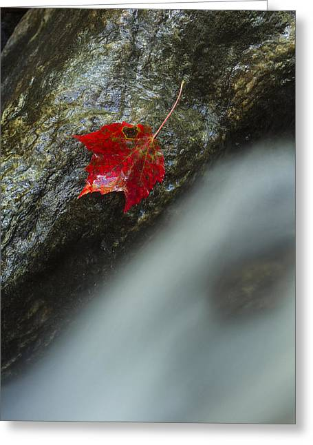 40mm Greeting Cards - Maple leaf and waterfall Mount Mansfield Vermont Greeting Card by Andy Gimino