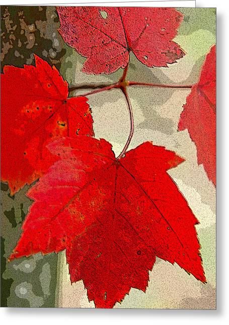 Red Maple Leaves Greeting Cards - Maple Leaf Display Greeting Card by Rob Huntley