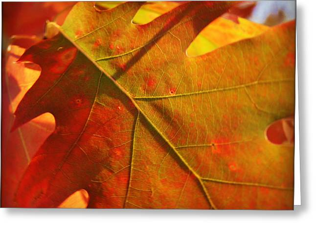 Sunset Posters Greeting Cards - Maple Leaf Macro Greeting Card by Carol Toepke