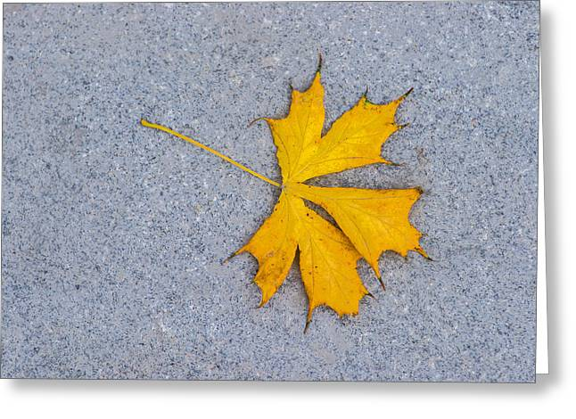 Maple Leaf On Granite 5 Greeting Card by Alexander Senin