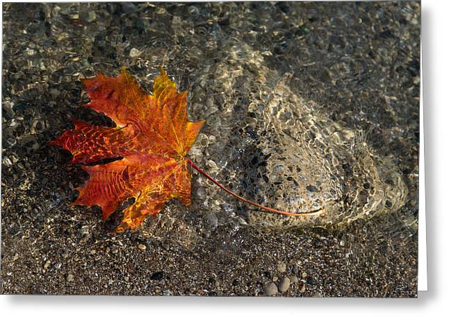 Sand Patterns Greeting Cards - Maple Leaf - Playful Sunlight Patterns Greeting Card by Georgia Mizuleva