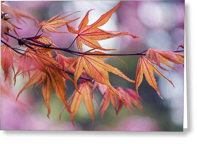 Vancouver Greeting Cards - Maple Leaf - Vancouver Greeting Card by May L