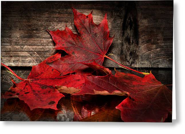 Yardwork Greeting Cards - Maple Leafs on canvas Greeting Card by Toppart Sweden