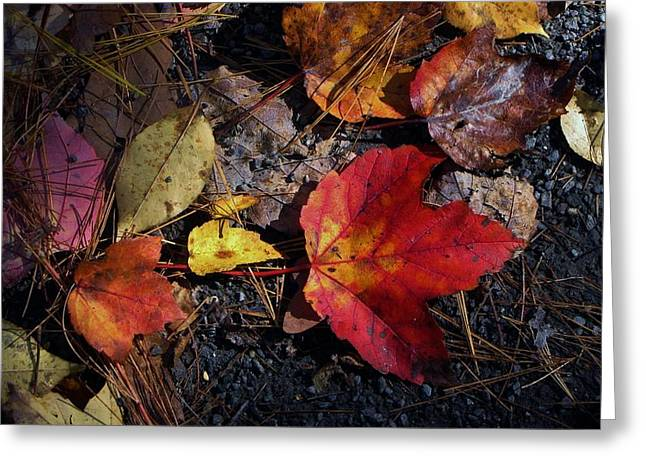 Red Fallen Leave Photographs Greeting Cards - Maple Leaf in Shadow Greeting Card by Michael Saunders