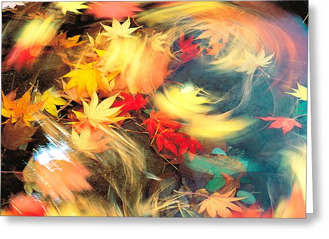 Fallen Leaf Greeting Cards - Maple Leaves, Blurred Motion Greeting Card by Panoramic Images