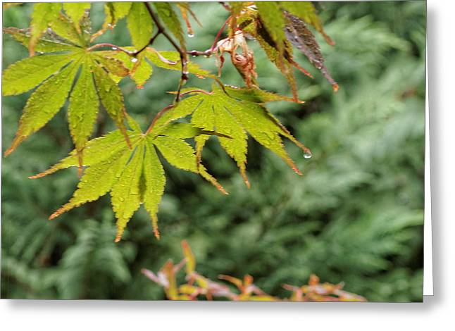 My Ocean Greeting Cards - Maple Leaves Greeting Card by   FLJohnson Photography