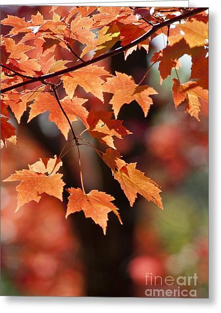 Ralser Greeting Cards - Maple Leaves II Greeting Card by Steven Ralser