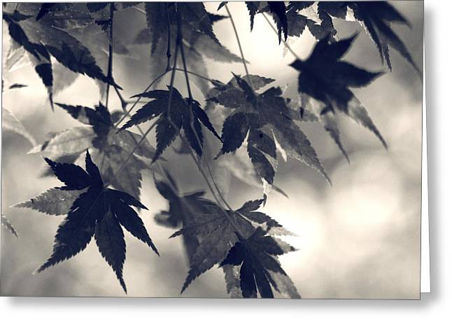 Square Print Greeting Cards - Maple leaves in black and white- one Greeting Card by Sylvia Cook