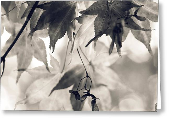 Square Print Greeting Cards - Maple leaves in black and white- two Greeting Card by Sylvia Cook