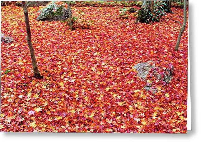Maple Leaves On The Garden Greeting Card by Panoramic Images
