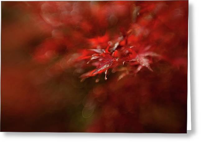 Maple Greeting Card by Mel Brackstone