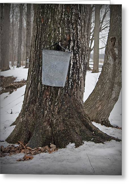 Maple Syrup Greeting Cards - Maple Sugaring Greeting Card by John Stephens