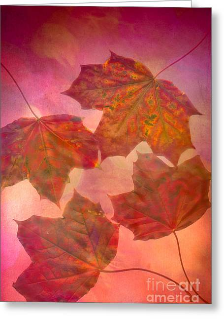 Fall Colors Greeting Cards - Maple Syrup Greeting Card by Jan Bickerton