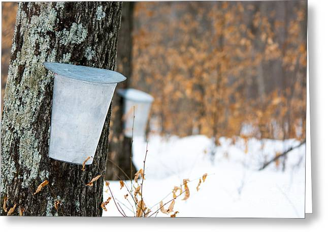 Sugaring Season Greeting Cards - Maple Syrup Time Greeting Card by Cheryl Baxter