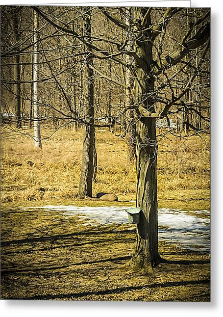 Dripping Tap Greeting Cards - Maple Syrup Time Greeting Card by LeeAnn McLaneGoetz McLaneGoetzStudioLLCcom
