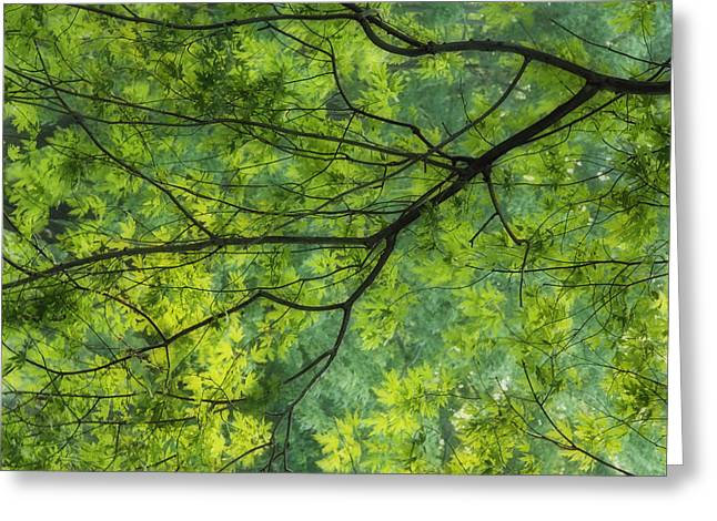 Descriptors Greeting Cards - Maple Tree At Selkirk Provincial Park - Greeting Card by Darwin Wiggett