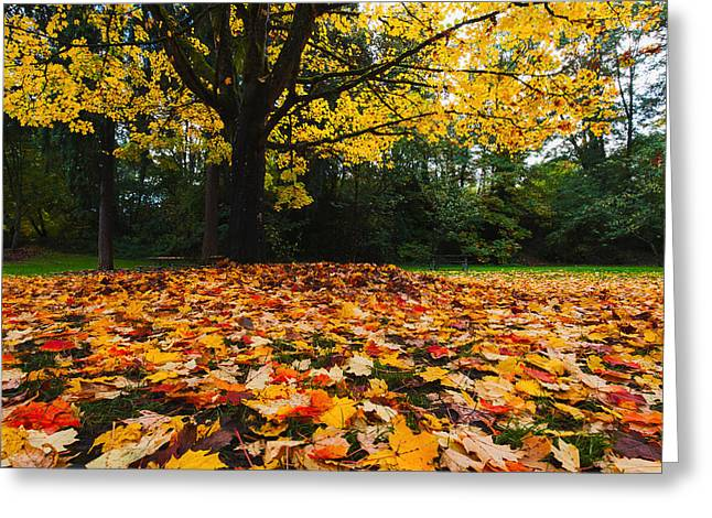 Red Fallen Leave Photographs Greeting Cards - Maple tree - Fall color Greeting Card by Hisao Mogi