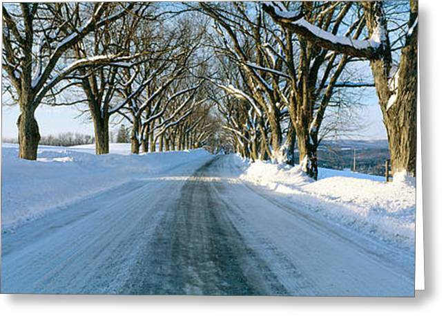 New England Winter Greeting Cards - Maple Trees In Snow, Lyndonville Greeting Card by Panoramic Images