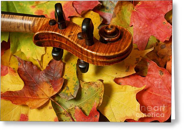 Red Tiger Greeting Cards - Maple Violin Scroll on Fall Maple Leaves Greeting Card by Anna Lisa Yoder