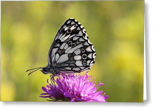 Marble Eye Greeting Cards - Marbled White butterfly  Greeting Card by Boza C