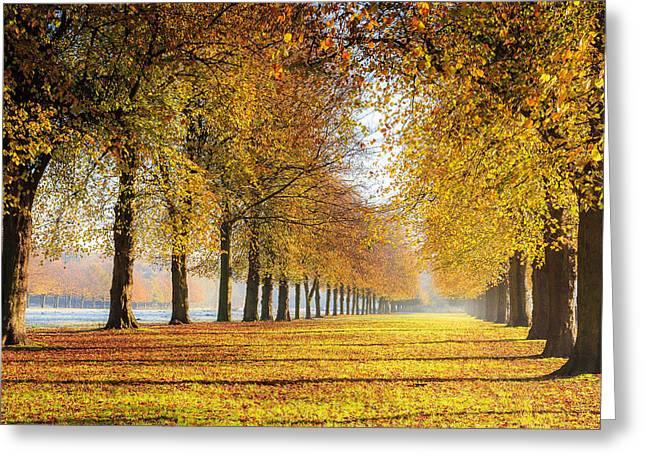 Peaceful Scene Greeting Cards - Marbury Country Park - Lime Avenue in November Greeting Card by Joe Wainwright