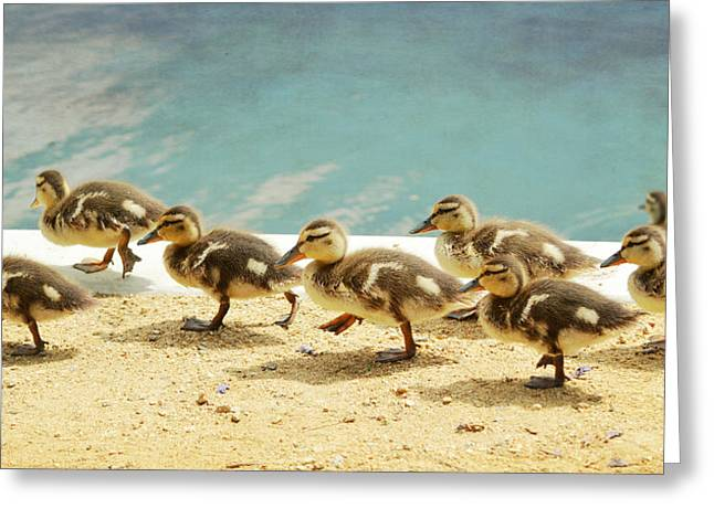 Ducklings Greeting Cards - March Of The Ducklings Greeting Card by Fraida Gutovich