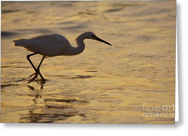 Snowy Egret Greeting Cards - March of the Egret Greeting Card by Mike  Dawson