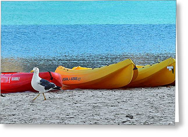 Canoe Greeting Cards - March of the Seagull Greeting Card by Christine Till