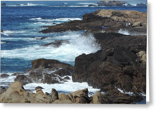 Point Lobos Greeting Cards - March Wolves Greeting Card by Laura Hamill