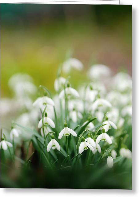 Small Flowers Greeting Cards - Marching Into Spring Greeting Card by Rebecca Cozart