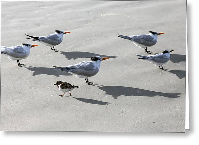 Tern Greeting Cards - Marching To A Different Drummer Greeting Card by Lynn Palmer