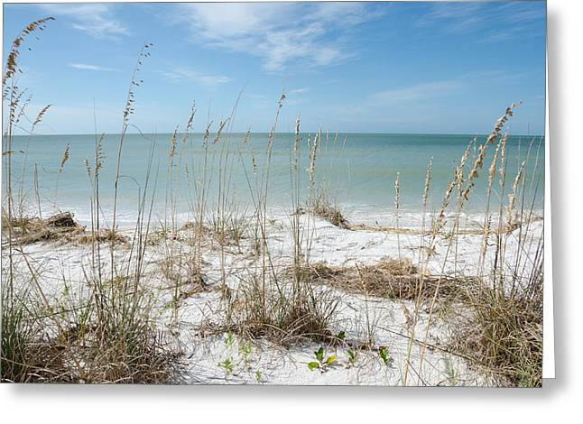 Marco Island Greeting Card by Margaret Pitcher
