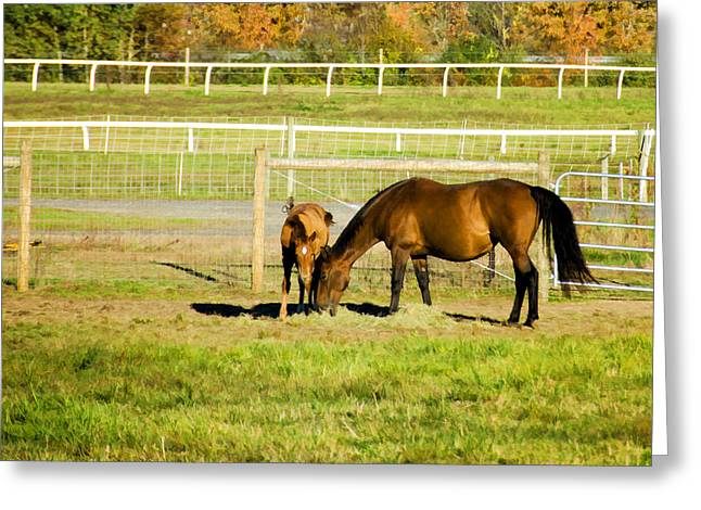 Umass Greeting Cards - Mare and Foal in Autumn Greeting Card by Donna Doherty