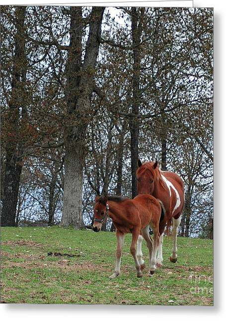 Struckle Greeting Cards - Mare And Foal Greeting Card by Kathleen Struckle