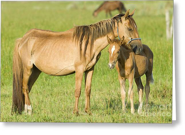 Horses With Nature Greeting Cards - Mare With Colt Greeting Card by William H. Mullins